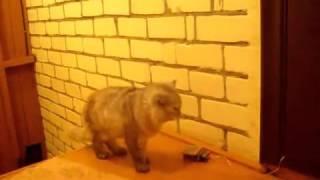 Doorbell for the cat / Дверной звонок для кота