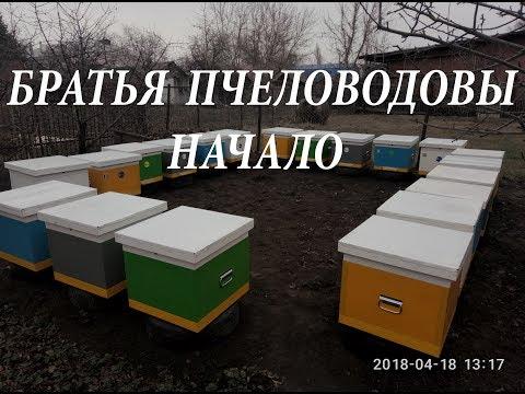 Пчеловодство. Начало.
