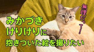 mqdefault - 【猫おもちゃレビュー】みかづきけりけりに抱きついた絵を撮りたいので引き続きみかづきけりけりで遊んでみた