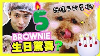 【🐶BROWNIE五歲生日!】準備了大驚喜😍?BROWNIE樣子的「生日蛋糕」?🎂(中字)❤️
