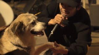 """七尾旅人 """"犬たちのためのコンサート"""" / TAVITO NANAO """"Concert for Dogs"""""""