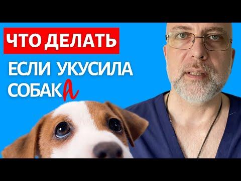 Что делать если укусила собака | Доктор Елизаров: Как обработать рану. Первая помощь
