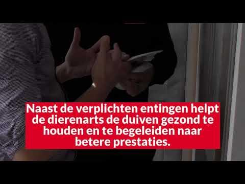 Video Duiven gezond houden in het najaar:op controle
