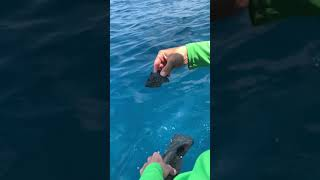 Tiny Fish Acting like Turtles #Shorts