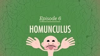 Homunculus - Crash Course Psychology #6