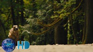 Max 2 White House Herolast scene part 2watch movie hd