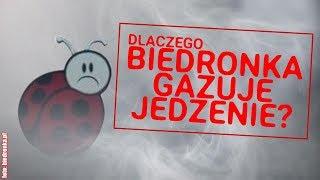 Fumigacja w Biedronce. Czy to bezpieczne dla zdrowia?