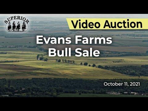Evans Farms Bull Sale