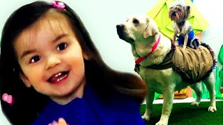 Yankee Doodle song with Big & little Dogs | Kids Songs | Nursery Rhymes