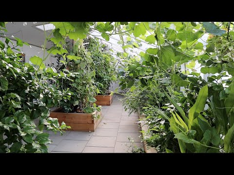 , title : 'How I Naturally Keep My Greenhouse Cool in the Summer Heat