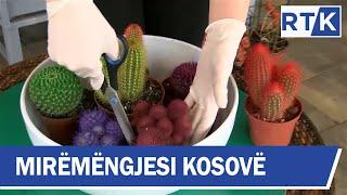 Mirëmëngjesi Kosovë - Kronikë - Kujdesi për lulet 15.02.2020