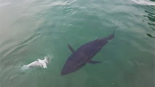 Links To Sources:   Seagull: https://www.youtube.com/watch?v=lYSa5pItVCY   Dog Bed: https://www.youtube.com/watch?v=d9hpPwcrylM  Shark: https://www.youtube.com/watch?v=_cOkpBJudeA  Dog Nose: https://www.instagram.com/p/B-AK68SgcmD/  Art: https://www.youtube.com/watch?v=xyJ6MQFP7E4  https://www.eden-gallery.com/?utm_source=Organic&utm_medium=GMB  Dog Noises: https://www.instagram.com/p/B-K196lA7OX/  Kangaroo: https://www.youtube.com/watch?v=KTwEfuNtGiE  Kayak: https://www.instagram.com/p/B8VO5UUhsW4/  https://www.instagram.com/coreyrichproductions/  www.novussselect.com  Dog & Cat: https://www.instagram.com/p/B99zDywhlxB/  Drone: https://www.instagram.com/p/B-IVPboHBPg/  Motor Bike: https://www.instagram.com/p/B90G2AwBLaY/  Diver: https://www.youtube.com/watch?v=udAfmWrxi2I  Pool Table: https://www.facebook.com/charlestheinventor/     Raccoon: https://www.instagram.com/p/BVmnCDeA9rz/  Songs:   That's Alright by Peyruis https://soundcloud.com/peyruis  Creative Commons — Attribution 3.0 Unported — CC BY 3.0  Free Download / Stream: https://bit.ly/peyruis-thats-alright  Music promoted by Audio Library https://youtu.be/FkVo3GCmnPk     Campfire by extenz https://soundcloud.com/extenz Creative Commons — Attribution 3.0 Unported — CC BY 3.0 Free Download / Stream: https://bit.ly/extenz-campfire Music promoted by Audio Library https://youtu.be/-yZTrbMkF58   Track: Soulful — Waimis [Audio Library Release] Music provided by Audio Library Plus Watch: https://youtu.be/SZrFx8J1MFE Free Download / Stream: https://alplus.io/soulful   Ponies and Balloons - The Green Orbs https://youtu.be/b21OZGxPXUs   Way Home by Tokyo Music Walker https://soundcloud.com/user-356546060  Creative Commons — Attribution 3.0 Unported — CC BY 3.0  Free Download / Stream: https://bit.ly/tokyo-music-walker-way...  Music promoted by Audio Library https://youtu.be/pJThZlOuDtI   Falling For You by Nettson https://soundcloud.com/nettson Creative Commons — Attribution 3.0 Unported — CC BY 3.0 Free Download / St