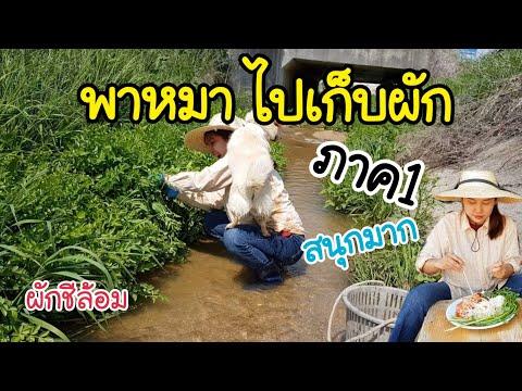 ผักชีล้อมต่างประเทศ/กินส้มตำหัวไชเท้าเเซ่บๆ/พาหมาไปเก็บผักสนุกมากๆ/สะใภ้เกาหลีbyKorean