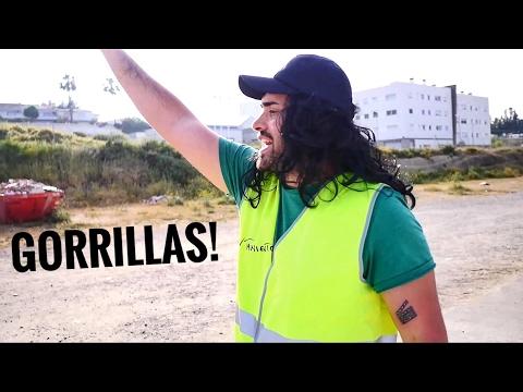 GORRILLAS - EQUIPO DE INVESTIGACIÓN (PARODIA/CRÍTICA)
