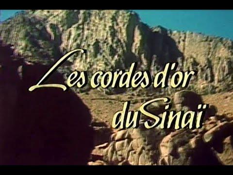 Les cordes d'or du Sinai