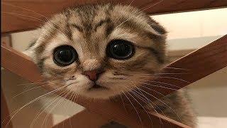 Смешные Коты и Котята   😻 Приколы с котами и кошками 😻   Милахи коты