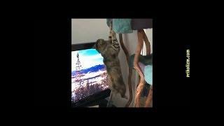 САМЫЕ СМЕШНЫЕ ПРИКОЛЫ С КОТАМИ №3 Funny cat,СМОТРЕТЬ ДО КОНЦА!!