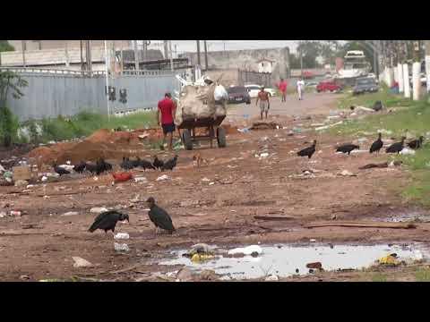 Poluição e lixo na Avenida Bernardo Sayão
