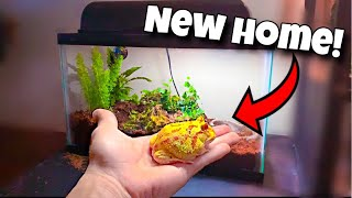 My ALBINO Pacman FROG Gets NEW Home!!