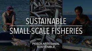 FAO Serie sobre políticas: Pesca artesanal sostenible (con subtítulos)
