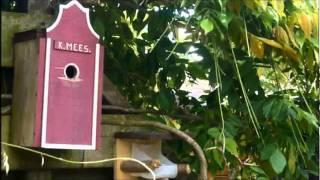 Koolmezen Vliegen Uit