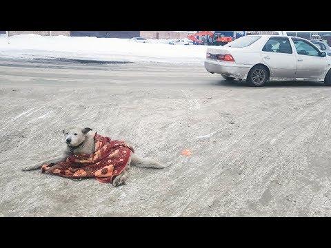 Сбил собаку и уехал Все видели и плакали Слышали как она скулила help the dog