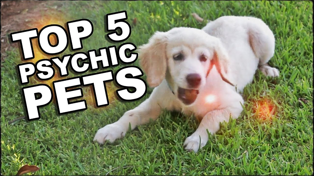 Can Pets See Ghosts? Top 5 Psychic Animals