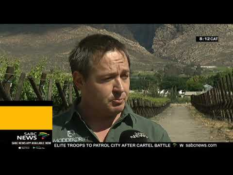 Record harvest levels on the cards for South African Table Grape Industry