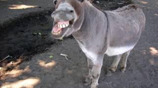 Live at Mick s Hot Rod Otis 02 Electrified Donkey