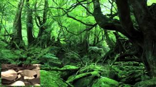 ジブリ映画「もののけ姫」主題歌(久石譲作曲)をマンドリンで。 Princess Mononoke By Mandolin