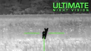 Gambar cover ATN ThOR 640 2.25X - Thermal Night Hunt - 2 Coyotes