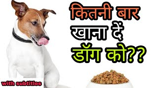 How many time We should feed our dog | कितनी बार डॉग को खाना दें| dog diet timing /schedule/Chart