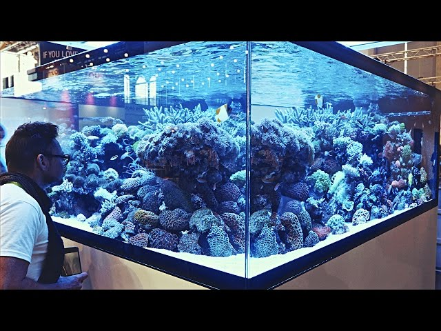 Aquascaping Ideas from Interzoo2016
