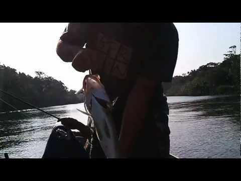 pescaria de robalo com guia Mario em Itanhaem