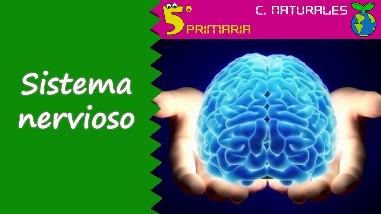 Sistema nervioso. Naturales, 5º Primaria. Tema 5
