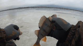 Рыбалка сегодня на рыбинском водохранилище