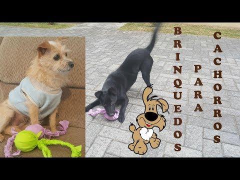 p/ cães: 2 Brinquedos