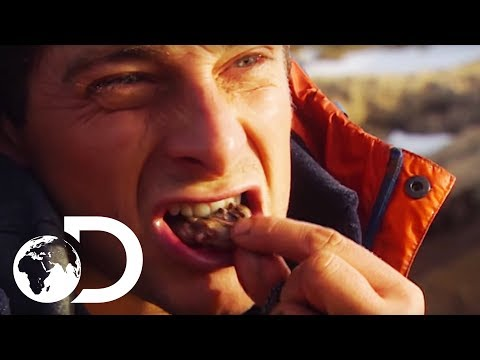 Bear Grylls' Guide To Finding Food In Extreme Environments | Born Survivor: Bear Grylls