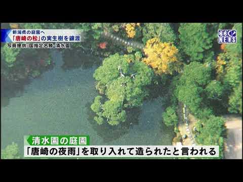 びわ湖放送ニュース4月4日 唐崎の松 新潟へ