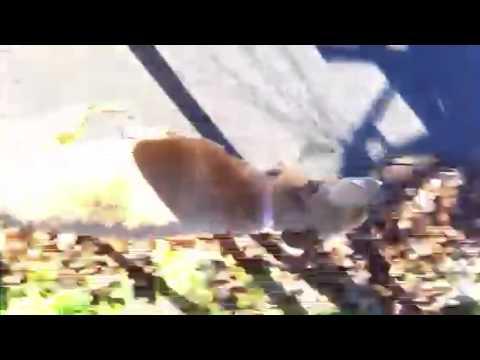 Suspensorium Kumpel für Hunde bis zum Ellbogen