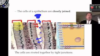 Epithelial Tissue Part1