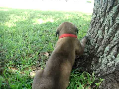 Annabelle Discovers a Tree in her Yard