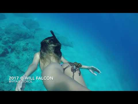 Underwater Adventures with models dolphins and octopus