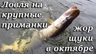 На что клюет рыба в начале октября