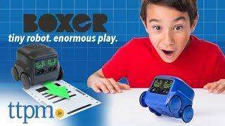 Boxer - Interactive A.I. Robot Toy from Spin Master