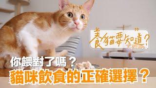 【養貓要知道EP2】貓咪怎麼吃才對?乾飼料、貓罐頭、鮮食、生食,怎麼選?