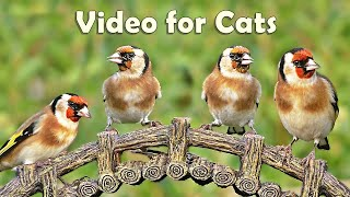 Videos for Cats to Watch Birds : 8 HOURS at Goldfinch Garden