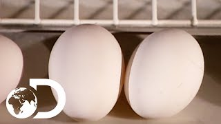 EGGS | How It's Made