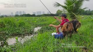 Cá Ăn Liên Khúc Luôn l Câu Vầy Mới Sướng Nè l Fish Hunter