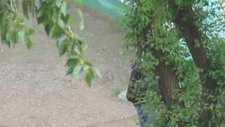 Попытка угона авто в Комсомольске на Амуре